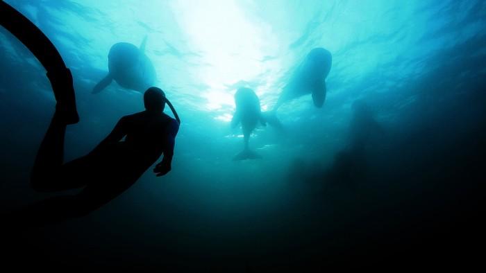 orcas_meet